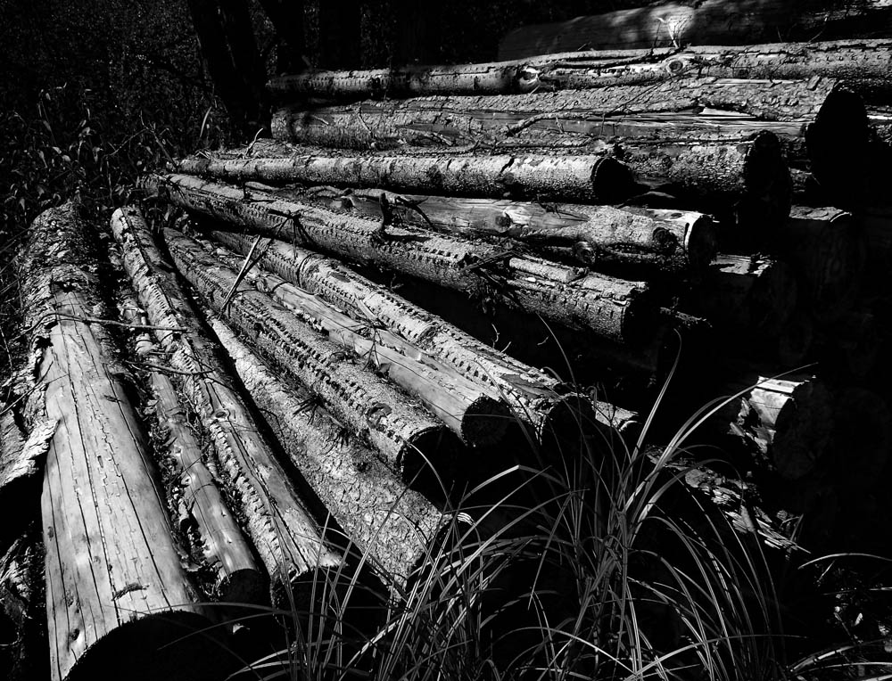 logs by Lothar Stobbe